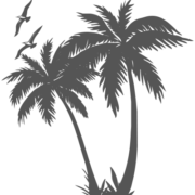 palm and birds